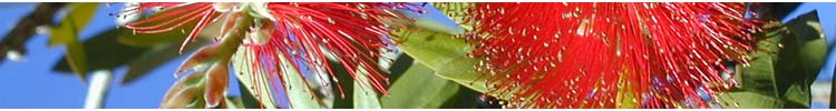 Florcerta - production and sales of bedding and basket plants, perennial herbs, shrubs, grasses and palms in Portugal.